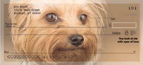 Yorkshire Terrier Bank Checks